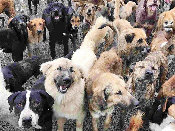 Pack of dogs.jpg