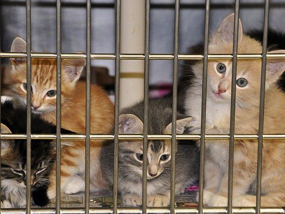 Kittens color.jpg